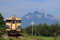 リンゴ畑の中を走る五能線 - 飛行機&鉄道写真館