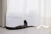 すぐに食べない猫 - きょうだい猫と仲良し暮らし