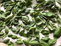 Dried basil (ドライ・バジル) - ファルマウスミー