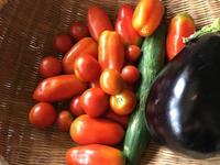 夏野菜 -  お花とハーブのアトリエ muguette