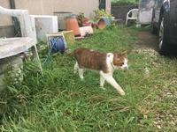 チコのSP - COMPLEX CAT