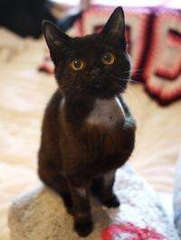 黒猫感謝の日猫 めりぃぽぴんず編。 - ゆきねこ猫家族