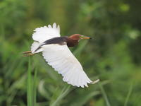 リベンジ - 『彩の国ピンボケ野鳥写真館』