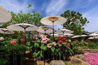 牡丹と春の花咲き乱れる西南院(當麻寺塔頭) - 花景色-K.W.C. PhotoBlog