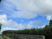 青空が覗いた!カフェ後方の新しい花壇を。 - 沖縄山城紅茶 茶摘み日記