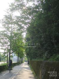 お盆休みの朝散歩 - yamatoのひとりごと