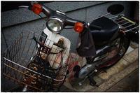散歩中京区辺り-4 - Hare's Photolog