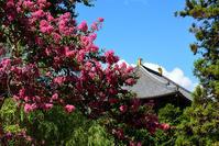 東大寺大仏殿・百日紅 - ちょっとそこまで