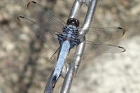 蜻蛉が止った - アンチLEICA宣言
