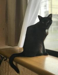 黒猫感謝の日と夜さんぽ - gin~tetsu~nosuke
