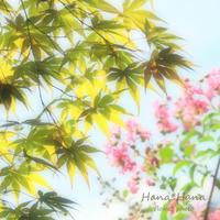 *紅葉* - HANA*HANA