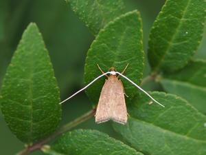 長い名前の蛾 - 90% Papillon -蝶の写真を撮っています-