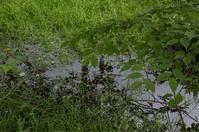 雨降りの上高地   5 〜 カモさんと遭遇 - mypotteaセンチメンタルな日々with photos 3