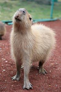 8月18日(土)終わりかけの夏 - ほのぼの動物写真日記