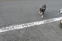 ジグザグ坂道トレーニングとごほうびポイント - HAMAsumi-Life