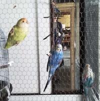 小鳥の寿命 - ここはな