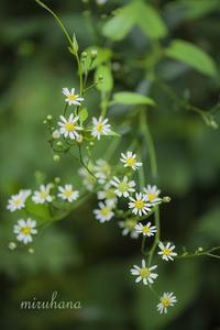 美しき花々 in 赤城自然園 - MIRU'S PHOTO