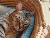 お昼寝最適な日 - ねこ飛び出し注意