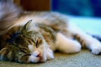 ✿Happy Caturday ヾ(=^・・^) - ✿happiness✿