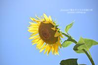 Flower Photograph #14 - psyuxe*旅とアトリエのあいだ