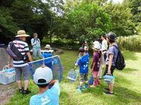 センター内ホタルの水路で生き物を探そう - 千葉県いすみ環境と文化のさとセンター