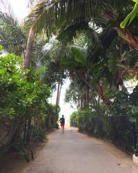 ハワイ旅行20183日目 - 晴れときどきPUGSLEY
