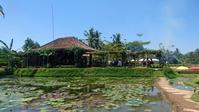 Green Kubu Cafe  @ Br, Pejengaji, Tegallalang ('18年4月) - 道楽のススメ