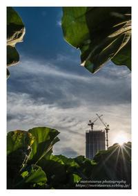 夏の夕日 - ♉ mototaurus photography