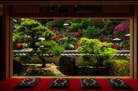 花咲く護念院(當麻寺塔頭) - 花景色-K.W.C. PhotoBlog