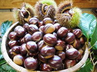 利平栗無農薬栽培の『利平栗』生理落果がはじまり収穫及び出荷は今年も9月中旬から!(2018) - FLCパートナーズストア