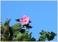 青空を見上げると - 野鳥の素顔 <野鳥と・・・他、日々の出来事>