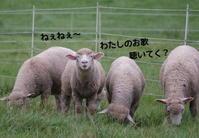 小岩井農場~羊と牛の歌合戦~ - ぶらり休暇
