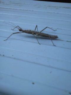 この虫の名前は解らないが・・・ -