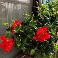 夏の花 - 日々徒然に・・・