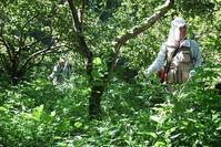 夏は雑草との戦い - 里山を歩く会
