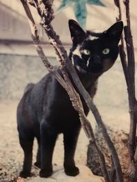 黒猫ニコの不思議な話 - 世界はぜーんぶ星座通りにできている♪