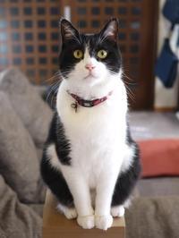猫のお留守番 ニャン次郎くん編、 - ゆきねこ猫家族