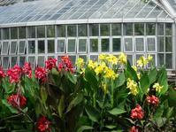 京都府立植物園のスイレンと蓮 - 彩の気まぐれ写真