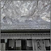 奥嵯峨野 - コバチャンのBLOG