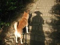 久しぶりにカメラをもって朝散歩 - 歯科医tokubeiの日記