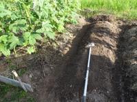 畑で畝立て久しぶり・・・南国畑 - 化学物質過敏症・風のたより2
