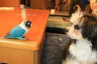 B.B & Chipo* 食べちゃうからっ! と、「アラタメマシテありがとう^^」 - FUNKY'S BLUE SKY