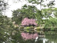 東京の桜@新宿御苑 - 海とネオンとミシンと私