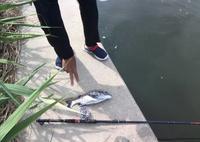 能登で釣り - あいの風