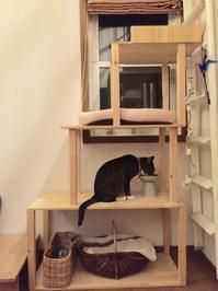 DIY初心者でも簡単にできる手づくりキャットタワー - キジシロ猫のいる暮らし 〜トム〜