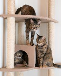 キャットタワーの思い出 - 猫と夕焼け