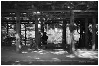 木陰 - BobのCamera