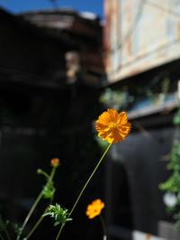 秋の気配 - 節操のない写真館