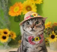 今年もヒマワリ帽子被ったにゃ! - 愛しき猫にゃん♪