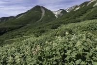 お花松原花の季節の終焉 - 白山に魅せられて